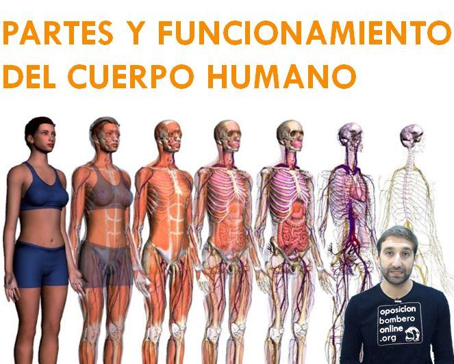 PARTES Y FUNCIONAMIENTO DEL CUERPO HUMANO